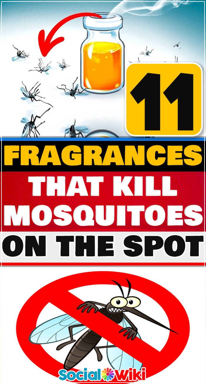 11 Fragrances That Kill Mosquitoes on the Spot 12